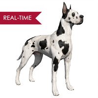 Great Dane Real-Time