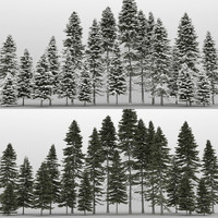 3d 20 picea trees