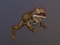 Boreal Toad (Low Poly)