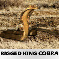 Realistic King Cobra - Rigged