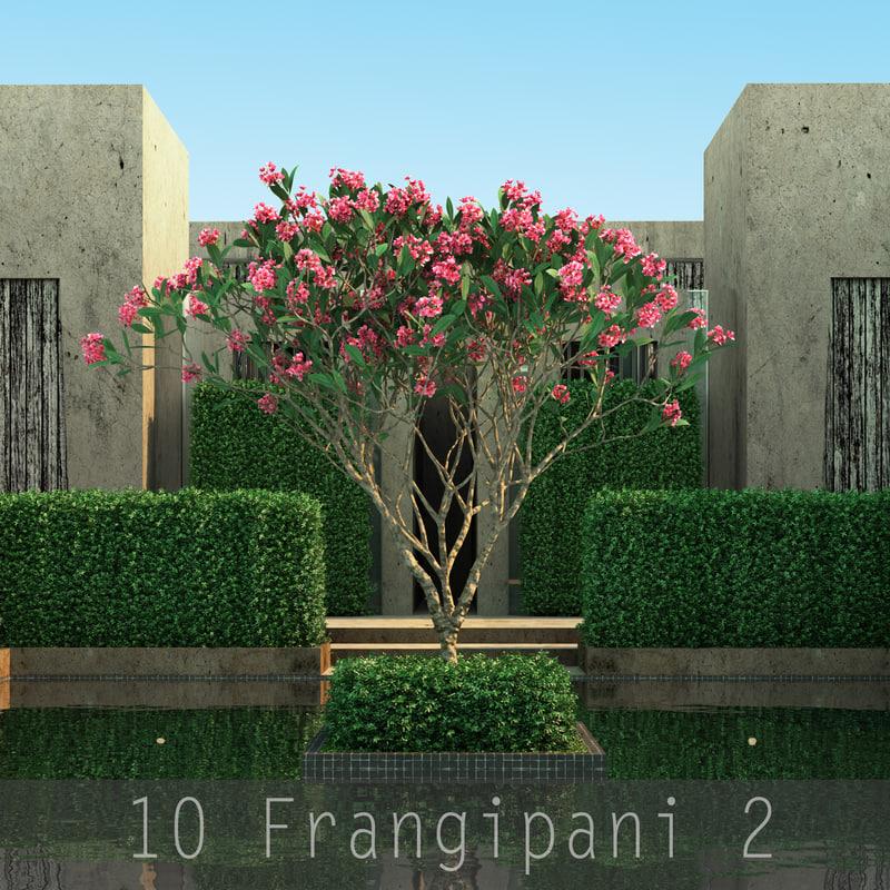 Frangipani 2_000.jpg