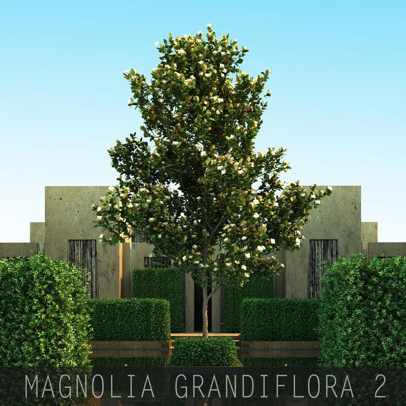 MAGNOLIA GRANDIFLORA_00.jpg