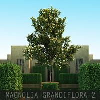 5 Magnolia grandiflora 2