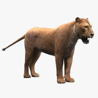 max lionless fur lioness