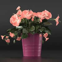 flower hibiscus 3d obj