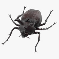 rhinoceros beetle rigged - c4d