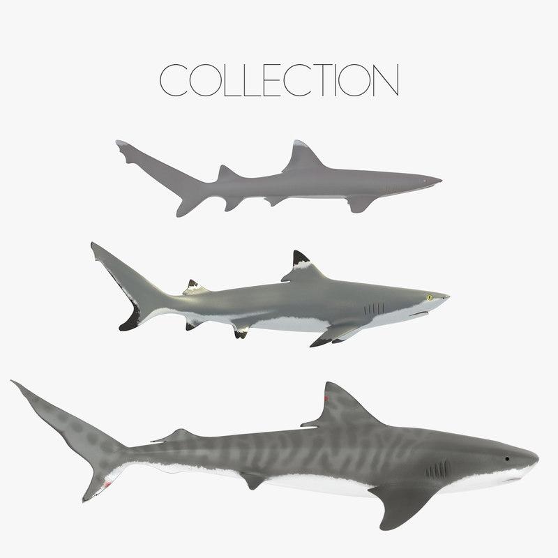 Sharks-collection-00.jpg