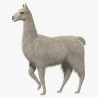 white llama 3d obj
