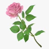 3d rose modeled leaf model