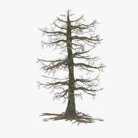 big dead oak tree 3d model