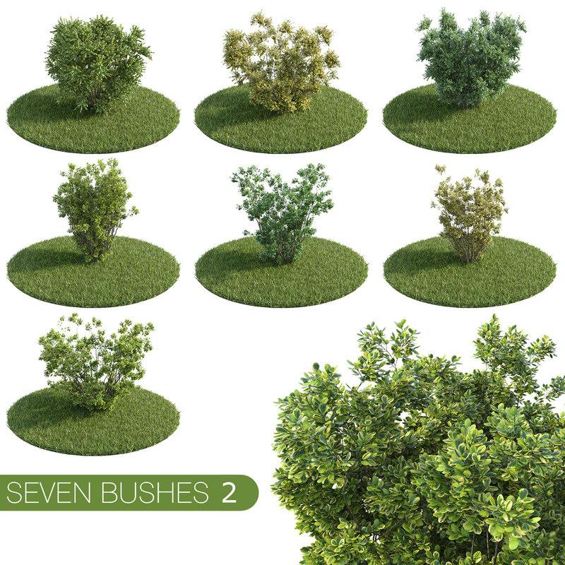 sbushes2 (1).jpg