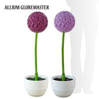 flower allium globemaster 3d model