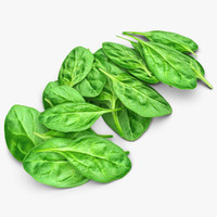 3d model realistic spinach