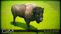 3d model animal bruno buffalo