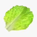 Leafy Vegetables 3D models