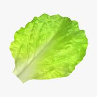 salad max