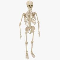 human skeleton - women max