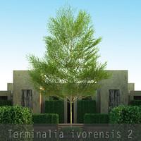 3d 4 tree