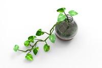 max money plant