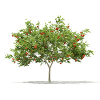 3d european rowan tree sorbus
