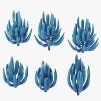 senecio blue finger max