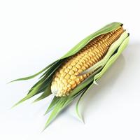 3d realistic corn
