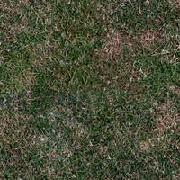 dirty grass