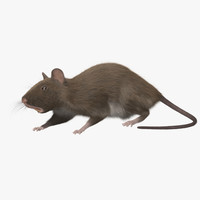 obj brown rat