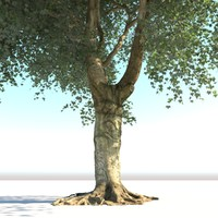3d model realistic old tree