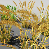 3d wheat field farm