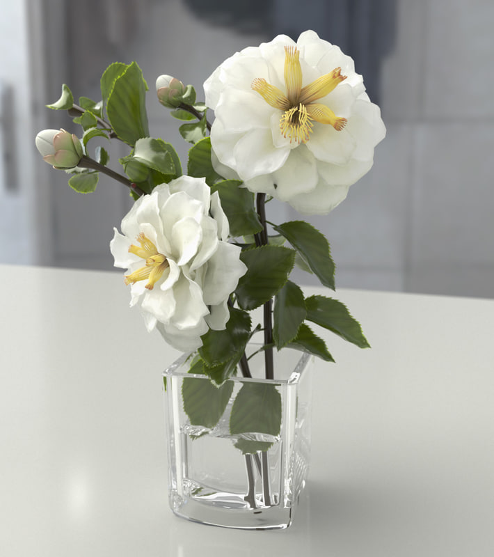 Rosa Branca 2.jpg
