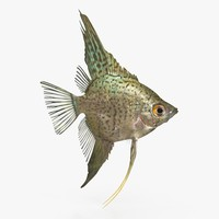 leopard angelfish 3d max