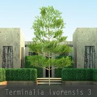 3d model 3 10 tree