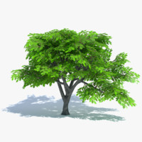 3d cartoon oak tree model