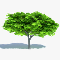 Cartoon Elm Tree