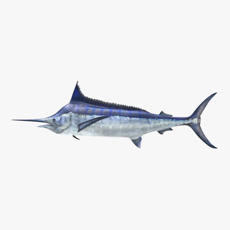 Blue Marlin vray 3d model 00.jpg