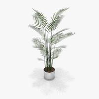Low polygon Areca Palm