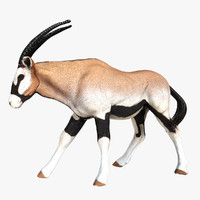 3d model of oryx