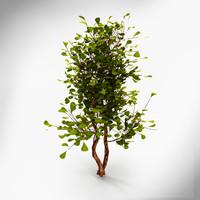 3ds bush
