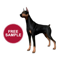 free doberman pinscher 3d model
