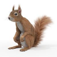 realistic squirrel rigged fur 3d max