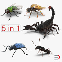 3d insects set gibbifer