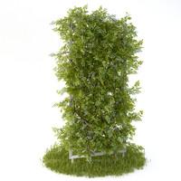 Perennial climbing plant for the garden