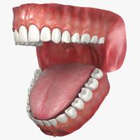 3d model jaw