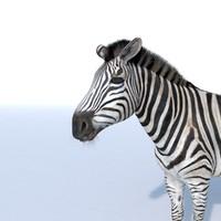 3d photorealistic zebra model