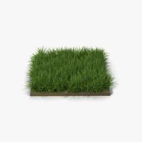 3d ryegrass lawns gardens