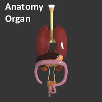 3d anatomy organ