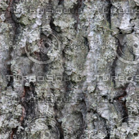 Forest tree bark