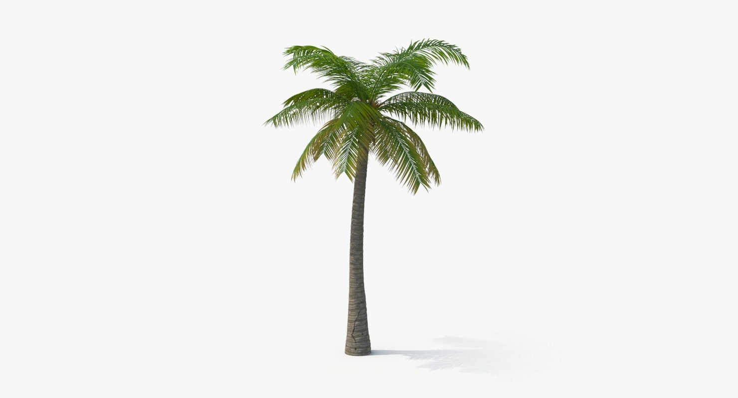 Palm_Tree_02_Cinewide_0000.jpg