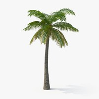 palm tree 02 max